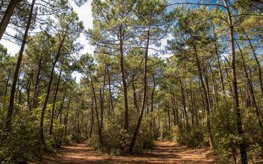 Forêt domaniale d'Olonne