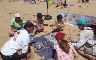 Visite guidée : La vie sur la plage