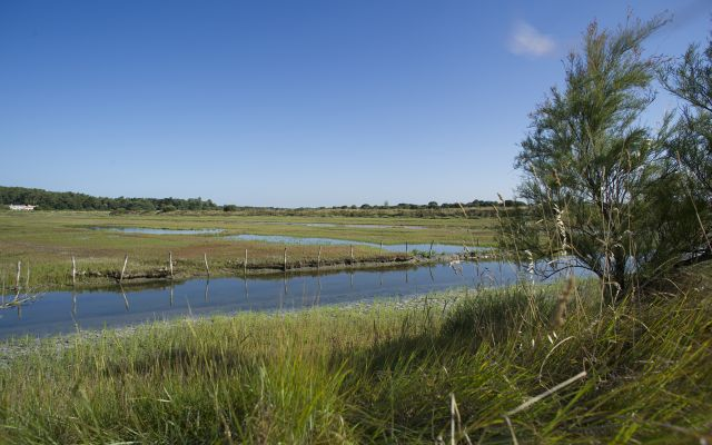 Marshes of Olonne