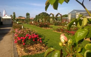 Rose garden  François Dorieux