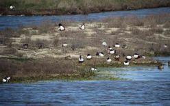 Visite guidée : Les oiseaux d'hiver
