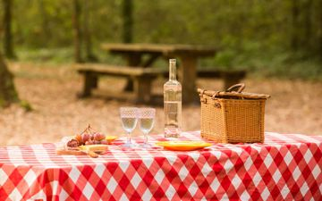 Picnic Forest