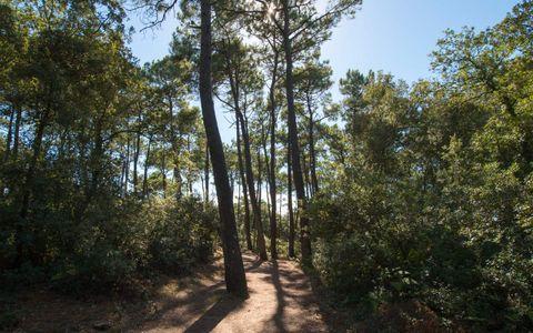Aire de pique-nique - Le Bois Saint Jean