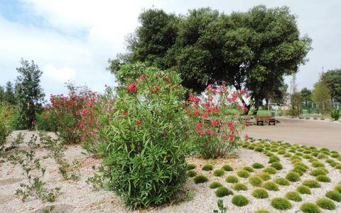 Aire de pique-nique - Parc des Roses