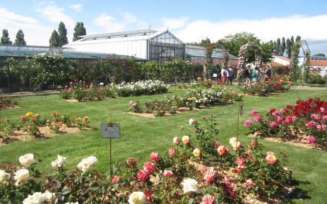 Visit the civic greenhouse gardens