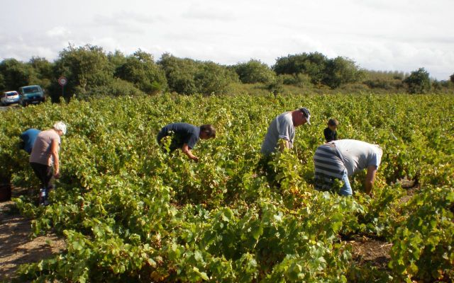 Wine-growers Day - Domaine des Granges