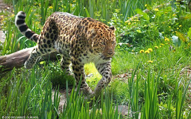 Tipp - Der bezaubernde Zoo