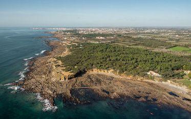 Saint-Jean woods