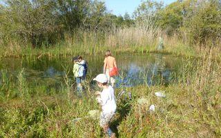 Visite guidée : Entre Forêt et marais, les Conches