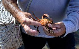 Visite guidée : Découverte du rivage de la Paracou