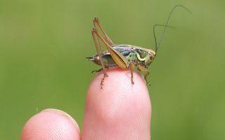 Visite guidée : Insectes à vue
