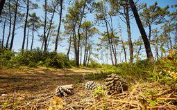 Marche respirée en forêt d'Olonne