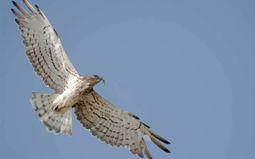 Visite guidée : Migration des oiseaux - COMPLET