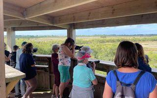 Observation des oiseaux du marais